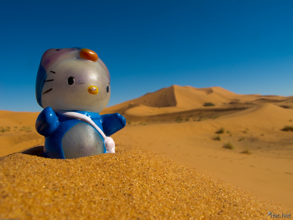 kitty in sahara