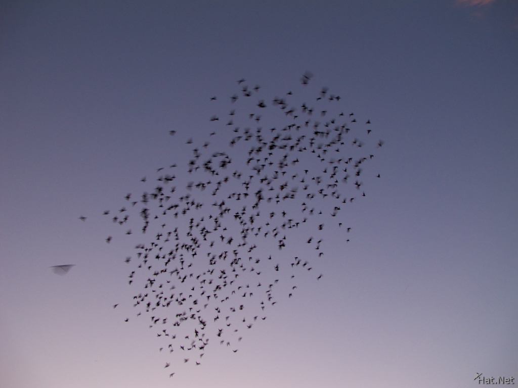 swarm of flying