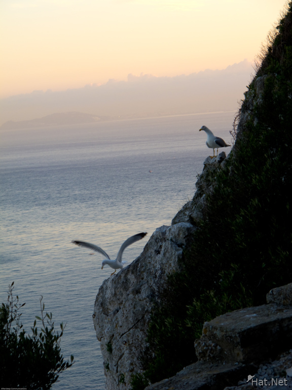 view--seagull of gibraltar
